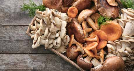 Why Choose Mushroom For Weight Loss
