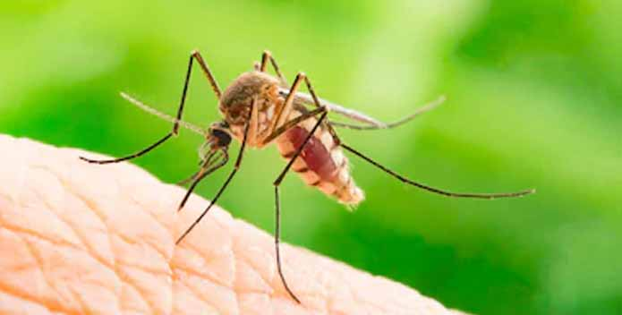 How Many Chromosomes Does A Mosquito Have