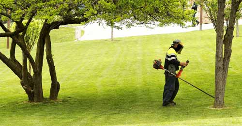 How to Get the Weed Eater Most Out of It